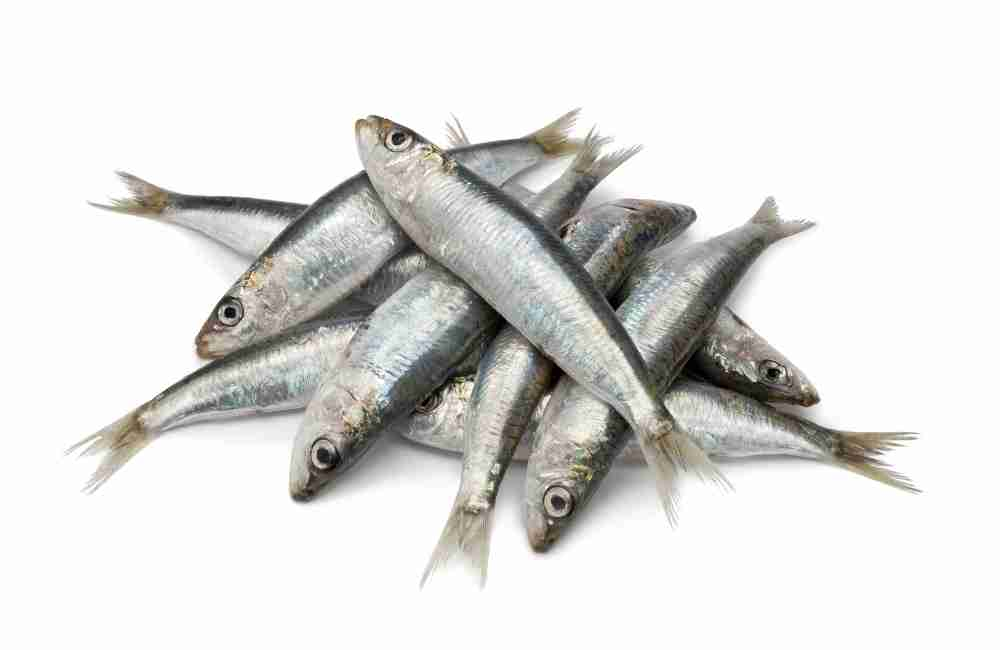 How to Eat Sardines Without Throwing Up