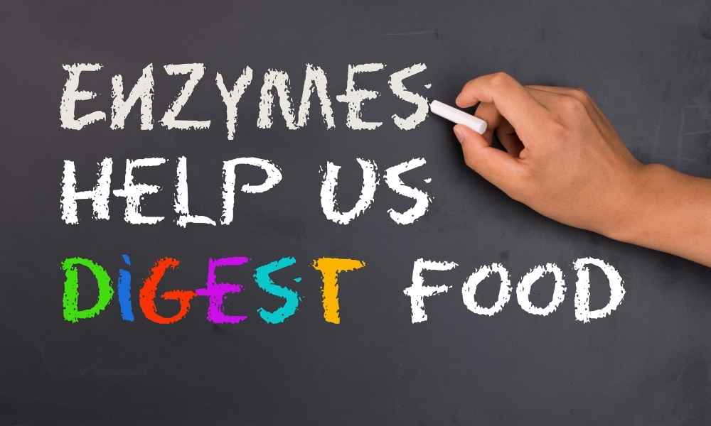 Enzymes and digestion_020821